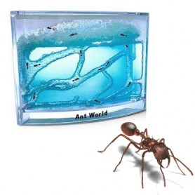 ant_world_1