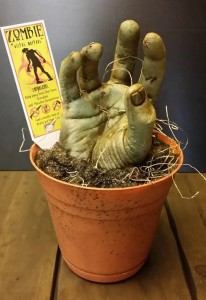 Planta zombie para los fans de The Walking Dead
